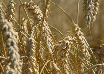 Crop insurance market shrinks as major carriers sell businesses