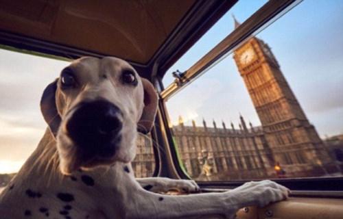 Far Out Friday: Insurer backs canine-themed London bus tour