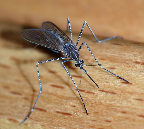Government warns travellers to Pacific of dengue outbreak