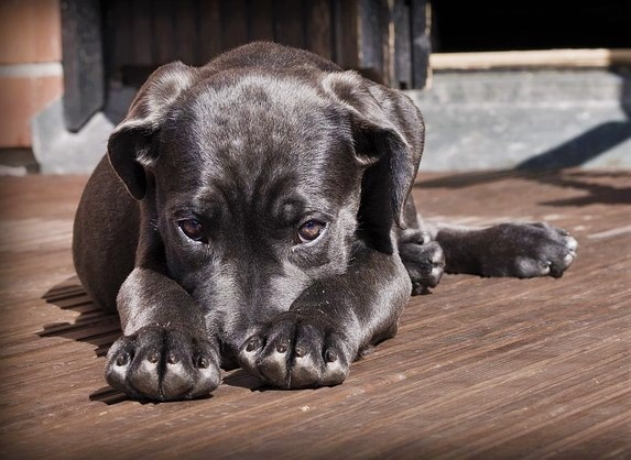 Five expensive and weirdest pet-related insurance claims
