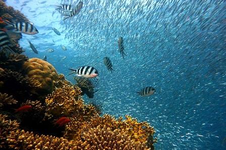 XL Catlin to co-present Ocean Risk Summit