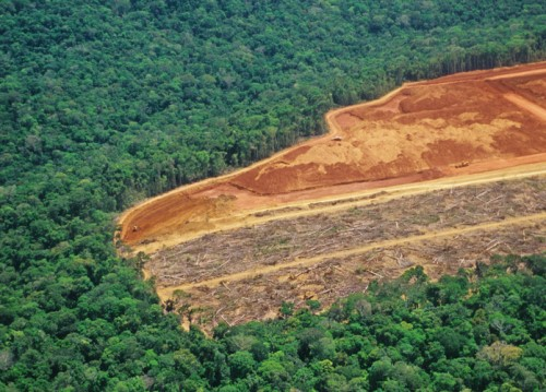 With nearly US$1tn at stake, deforestation top risk