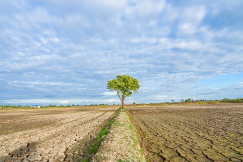 Health insurance relief offered for drought-impacted farmers