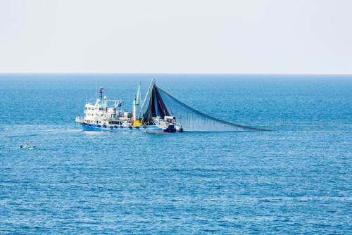 Insurance coalition makes move on illegal fishing