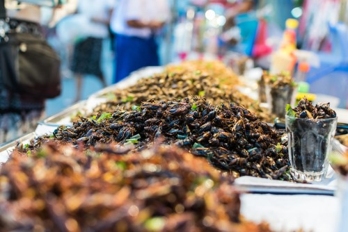 Insect farms spur a buzz among investment firms