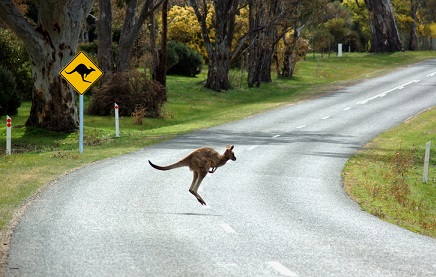 AAMI reveals hotspot for animal collisions