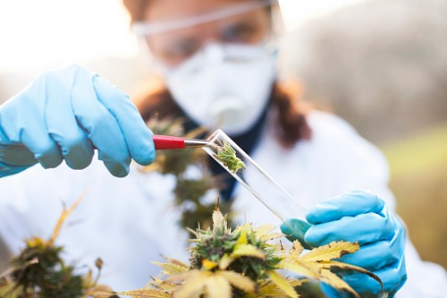 Canadians open to medical cannabis – if insurance is involved