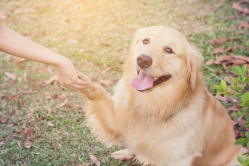 Insurer reveals weirdest canine claims