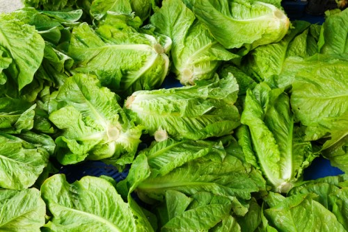 Deadly romaine lettuce E. coli outbreak causes insurance headache