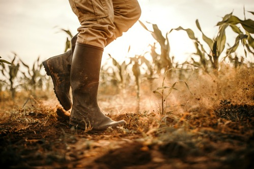 Crop insurance – everything you need to know