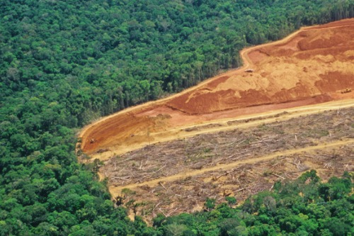 Major investors advise companies to tackle risks associated with deforestation