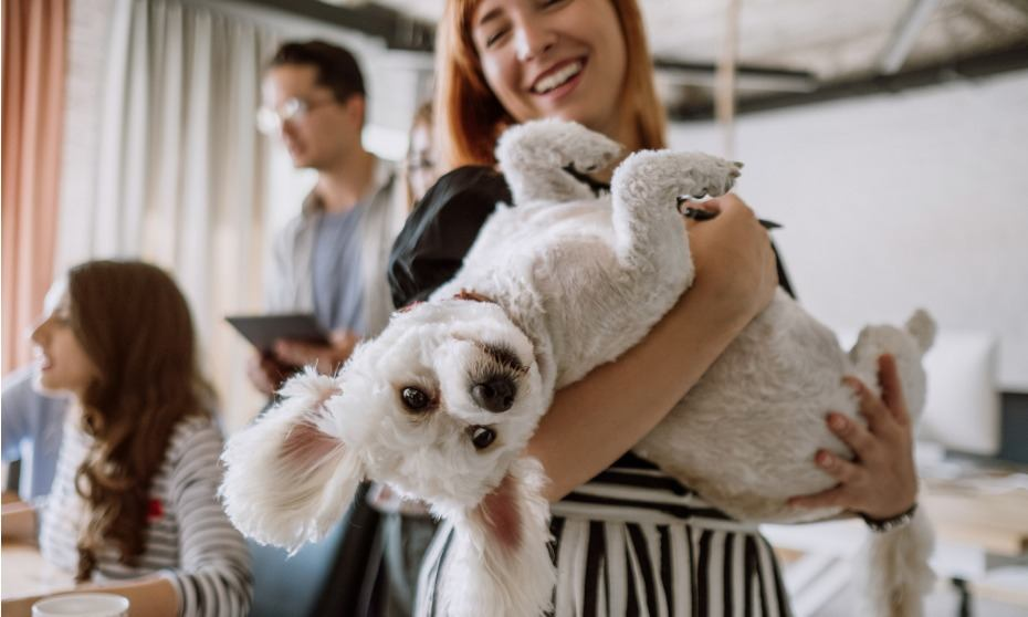 Pet-friendly offices: What you need to know