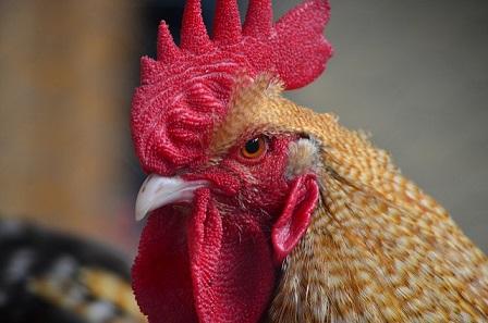 ArgoGlobal expands into livestock insurance market