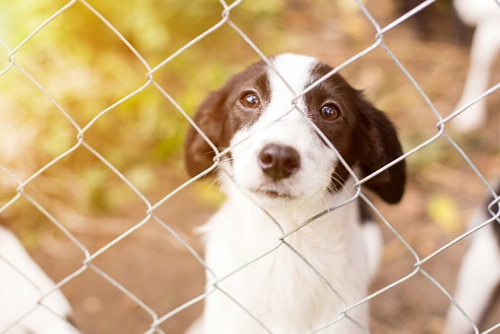 Seoul government to subsidise insurance for adopted stray dogs