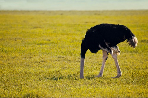 What ostriches can teach insurers about risk