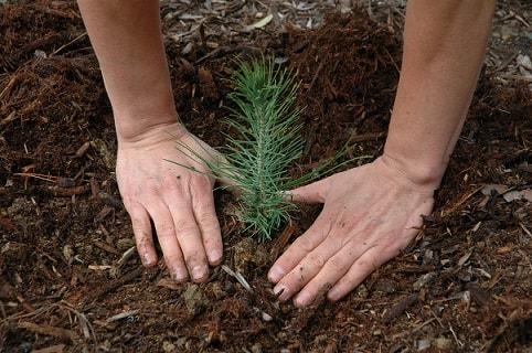 Insurer plants 80,000 trees in conservation effort