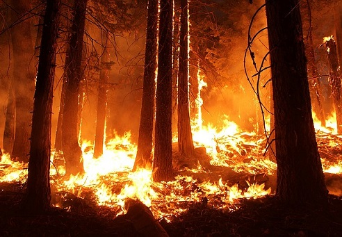 Major insurer's Q2 profits cut in half by wildfires
