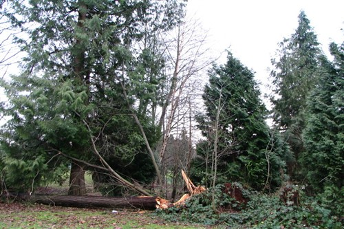 Edmonton storm leads to numerous wind-damage reports
